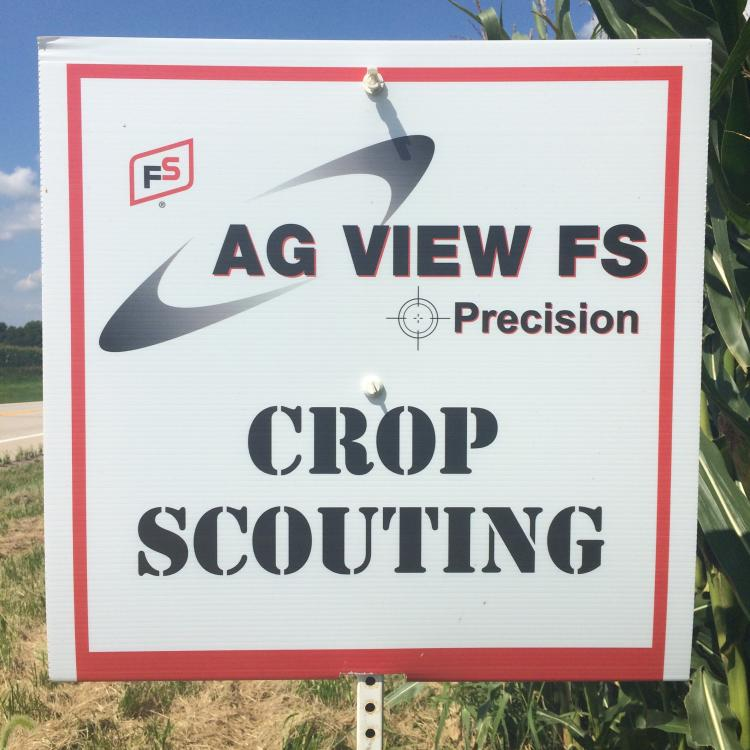 Crop Scouting